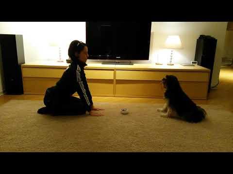 Tibet Tibetan Terrier funny dog training lustiges Hunde Training