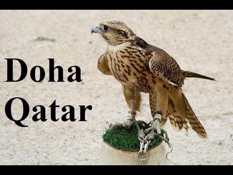 Qatar/Doha FALCONS Sale For 1 Million Riyals   Part 5
