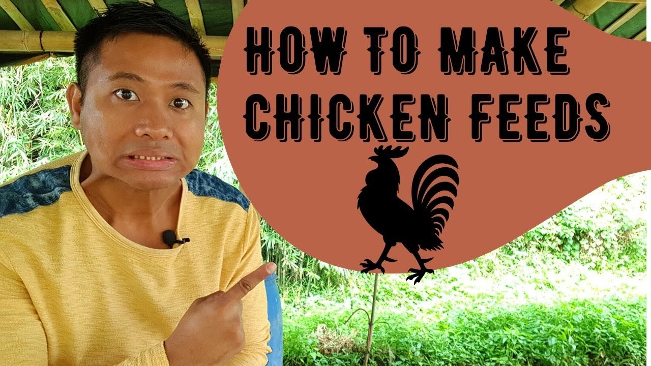 Download How to Make Chicken Feeds