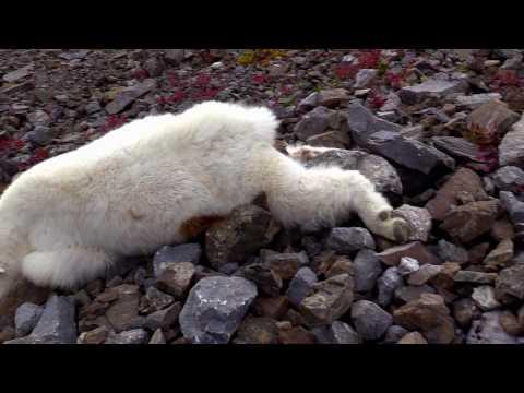 Yukon Hunt 2016 Highlight Reel