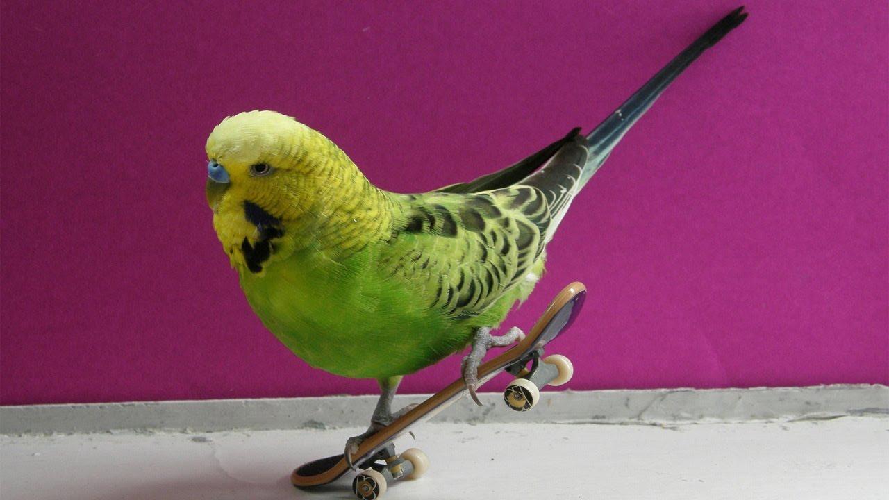 картинки с попугаями смешные