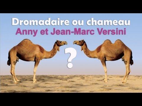 Dromadaire doovi for Dujardin imite le chameau