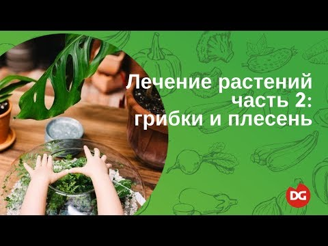 №21 Лечение растений. Часть 2: грибки и плесень