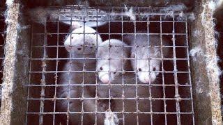 Изнанка твоей шубы(Изнанка твоей шубы Расследование Центра защиты прав животных