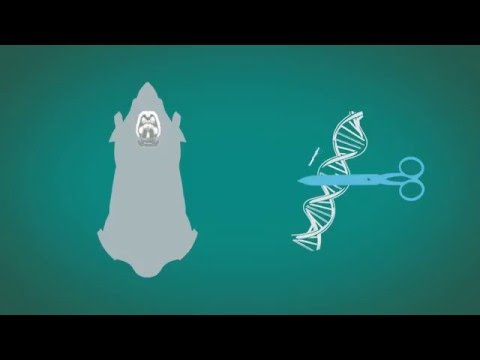 Dispelling Myths Around Animal Research