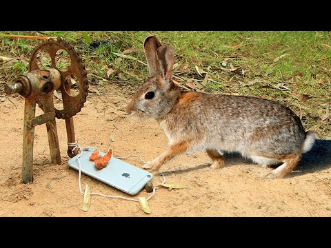 Easy Rabbit Trap Using iPhone & make from Bike - Fantastic Rabbit Trap Technology That Work 100%