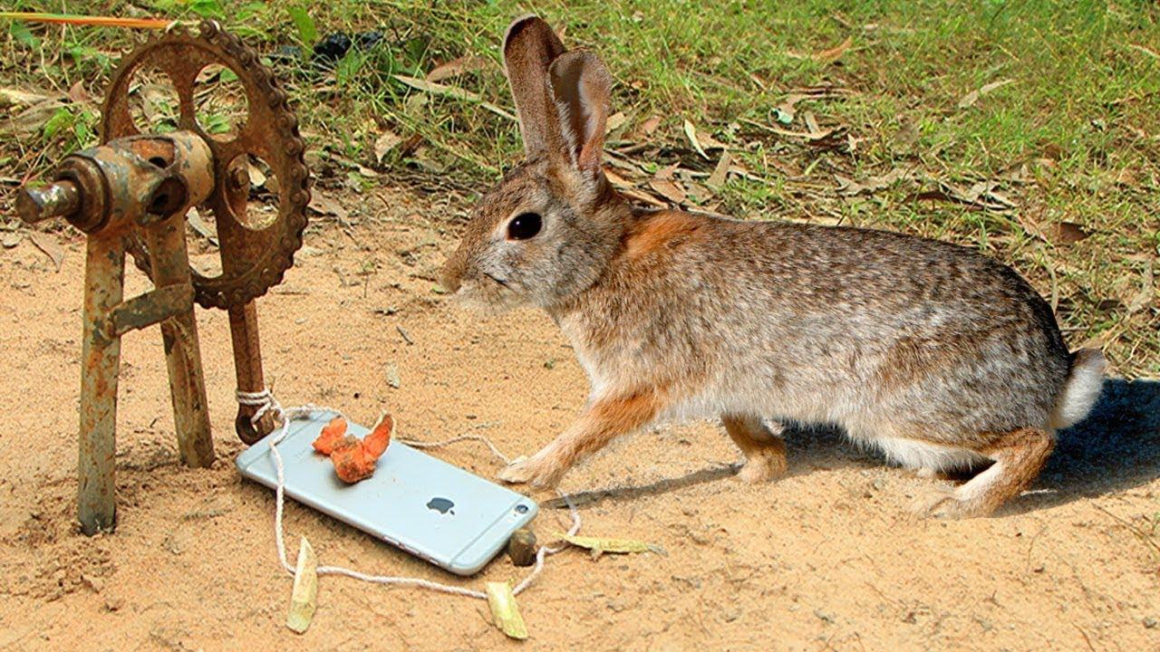 Как поймать кролика Домашнего и дикого, в огороде и в лесу