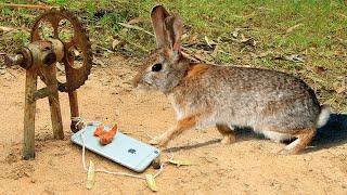 Fantastic Rabbit Trap Technology That Work 100%