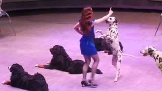 Цирк Багдасаровых. #4 собаки.