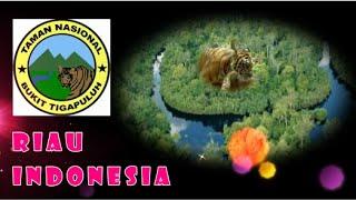 Wisata Indonesia : Taman Nasional Bukit Tiga Puluh Riau Indonesia, Mopon ID
