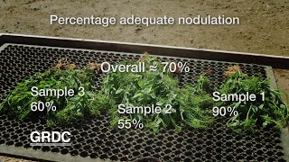 GCTV17: Legume Nodulation - sample scoring