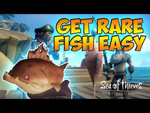 Get Rare Fish Easy | Hunter's Call | Anniversary Update | Sea Of Thieves