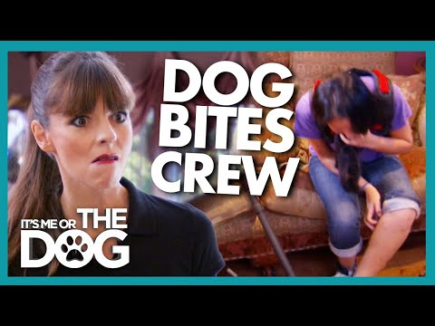 Dog with Over 100 Bites Adds Crew Member to the List! | It's Me or The Dog