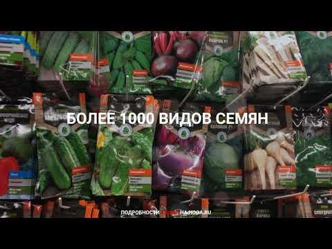 Купить семена в интернет магазине Hoga почтой России