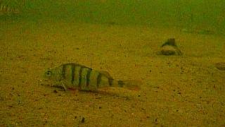поиск рыбы с помощью подводной камеры