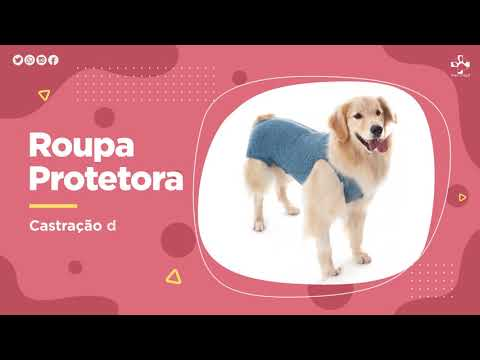 Roupa Protetora – Duo Dry Castração de Cães Machos