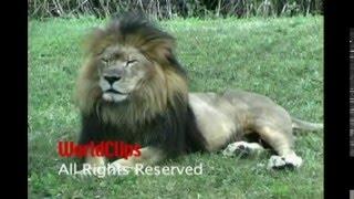 Удивительные животные нашей планеты