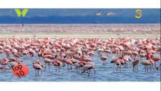 Top ten: tourist attractions in kenya
