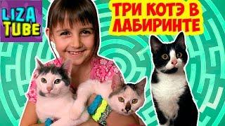 Три КОТА в лабиринте #7 Кто придет первым  Полоса препятствий для кошек  \ LizaTube