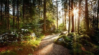 Relaxing Music with Nature Sounds, Forest  Music, Sleep Music, Meditation Music