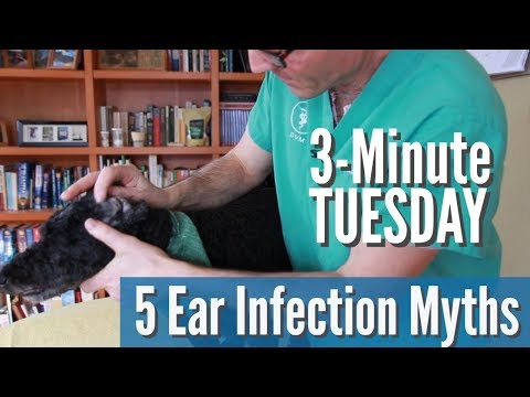 5 Dog Ear Infection Myths