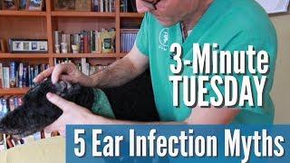 5 Dog Ear Infection Myths