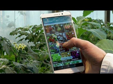 Приложение помогает фермерам различать паразитов и болезни растений (новости)