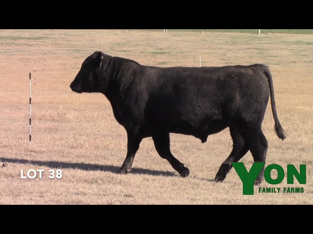 Yon Family Farms Lot 38