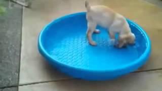 Смешное видео про животных 2016 года