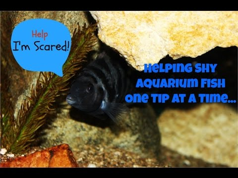 3 Tips To Help Shy Aquarium Fish