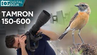 Bird Photography with the Tamron 150-600