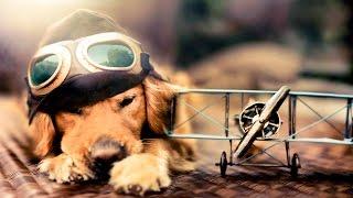 Расслабляющая музыка для собак - Для того, чтобы расслабиться и спать вашего питомца