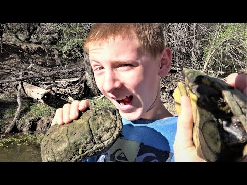 Double Turtle Cheese Burgers: It's Organic!  Nature, Travel, Herping, Funny Animals, 4K.