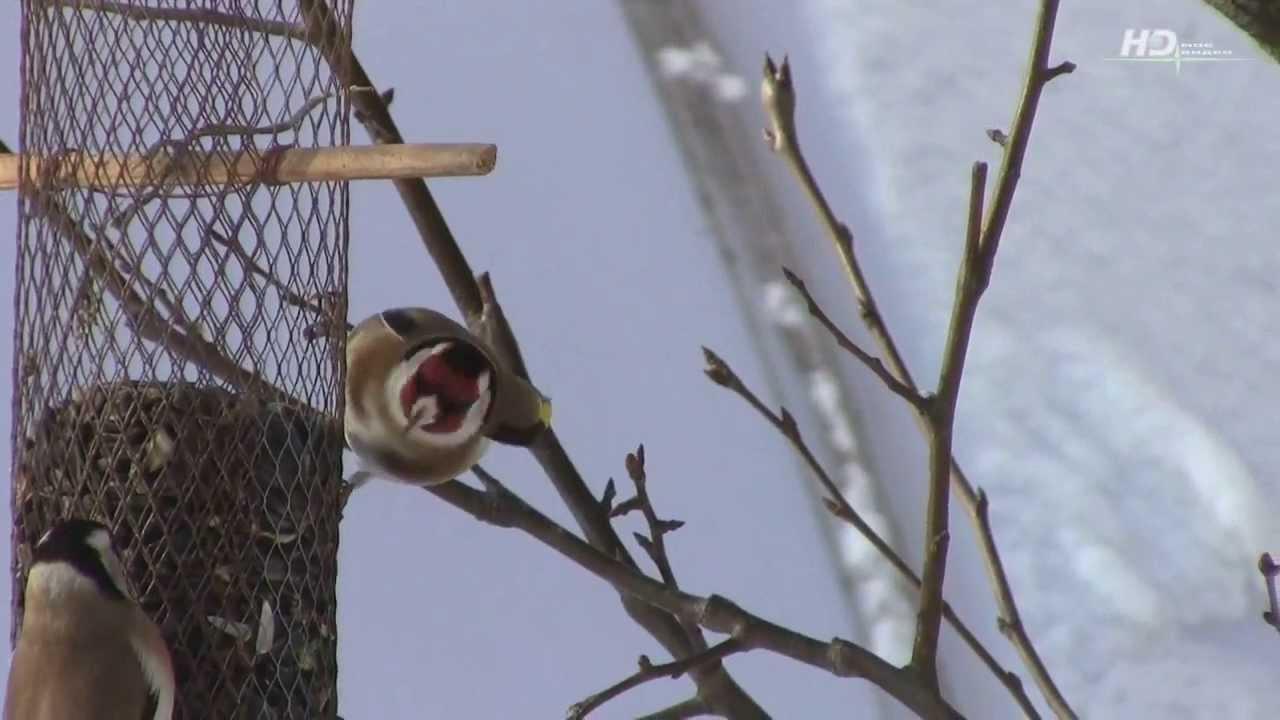 птицы урала зимой