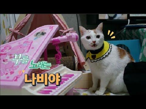 피아노를 치니 고양이가 노래를 해요