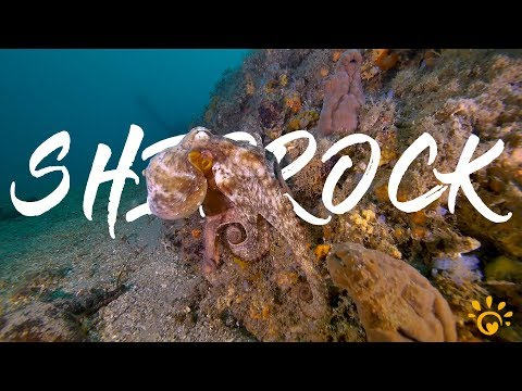 UNDERWATER WORLD - Shiprock