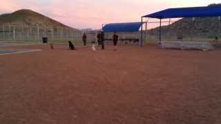 Dog Obedience Group Classes On The Westside Of El Paso