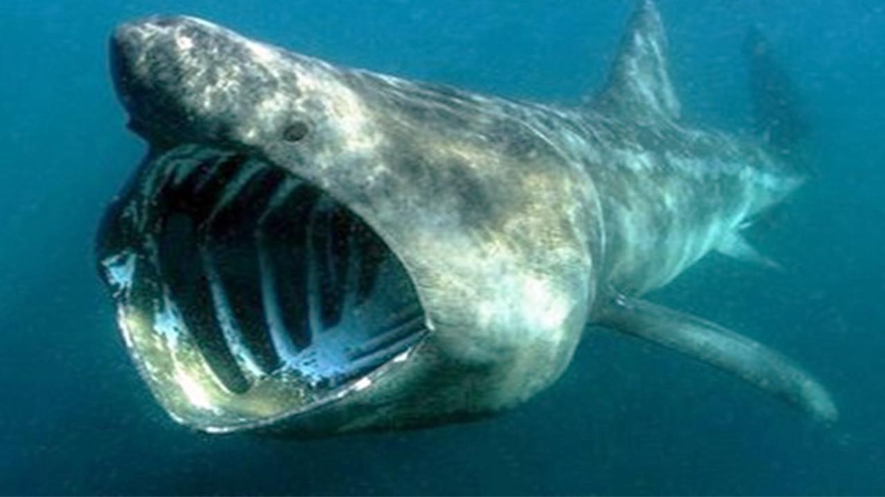 Scary Midnight Zone Fish