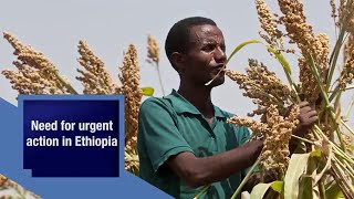Ethiopia's farmers urgently need seed to withstand El Niño drought impacts, feed the country