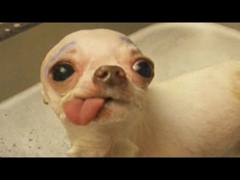 """Show Me Your Tongue!"" Hilarious Compilation"