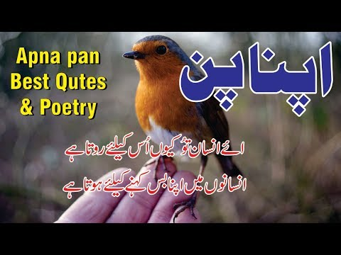 Apna Pan Poetry And Love Quotes In Urdu Hindi || Urdu Poetry Sad