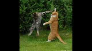 Funny Animals! Try Not To Laugh!