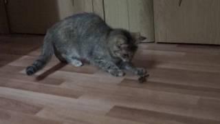 Кошка впервые видит саранчу