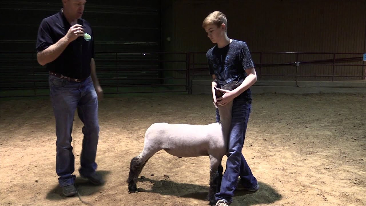 Sheep Project Resources Texas 4-H