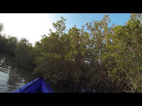 Kayaking around Abu Dhabi's Eastern Mangroves