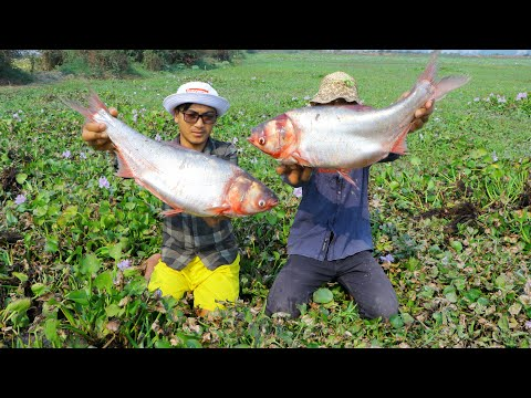 AMAZING FISHING VIDEO 2020!Dry Season Catching A Lot Of Fish In Rice Filed By Village Hunter