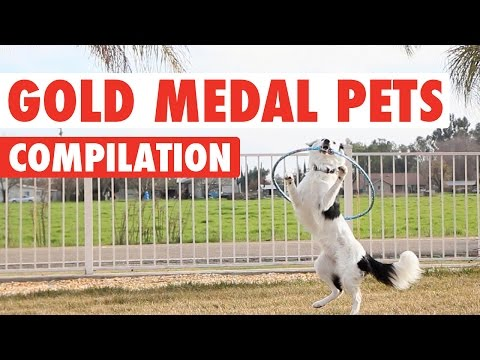 Gold Medal Pets Video Compilation 2016