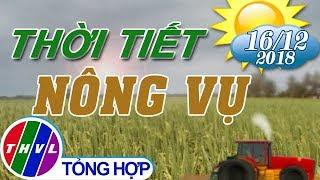 THVL | Thời tiết nông vụ (18h55 ngày 16/12/2018)