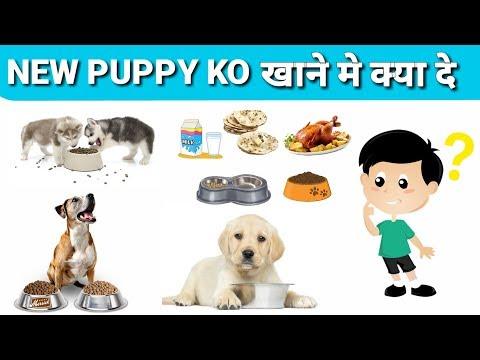 New puppy ko khane ko kya de /in hindi / new puppy food