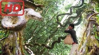 Невероятные Человеческие Поймать Змей С Помощью Бочки Ловушку   Как Поймать Змей Дерева В Джунглях